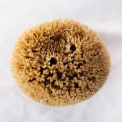 Esponja marina honey comb